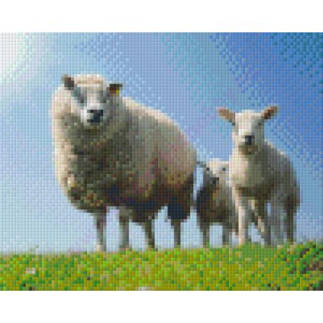 Bárány család